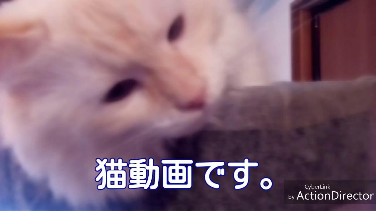 猫に癒されてください。