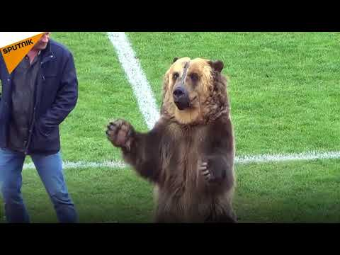 Russia: Professional Football League Game Kicked Off By Bear