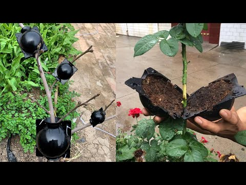 Plant Root Growing Box - Plant Rooting Ball