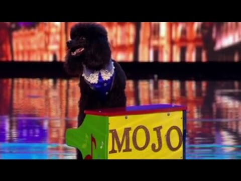A Piano-playing DOG on BGT!  | Auditions 5 | Britain's Got Talent 2017