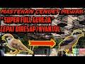 Masteran Cendet Mewah  Super Full Gereja  Mp3 - Mp4 Download