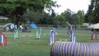 Momos First Dog Agility Cpe Fun Match