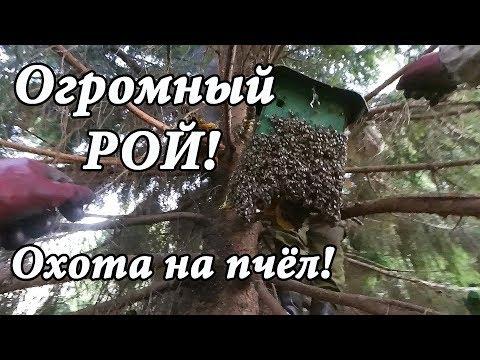 ЖЕСТЬ! Не повторять, ОПАСНО! Огромный РОЙ пчёл! Охотники за мёдом!