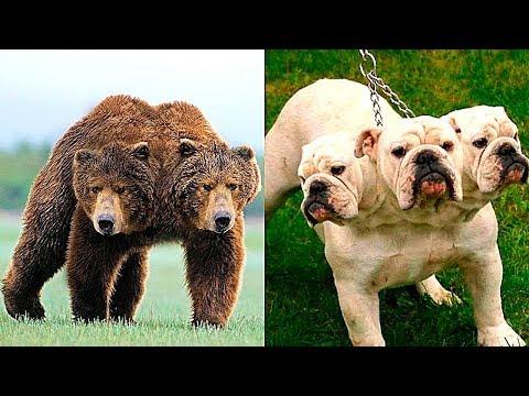 10 Двухголовых Животных, в Существование Которых Сложно Поверить