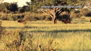 Safari Adventure Namibia 2 - Hunters Video