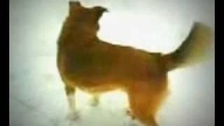 собака ногу ебака