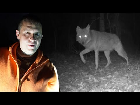 I'm glad we have coyotes on the farm