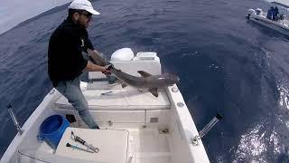 Συγκλονιστική απελευθέρωση καρχαρία από την ομάδα του Fish Hunter