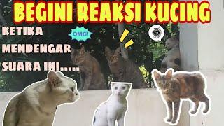 Membuktikan Suara Kucing Ini Bisa Membuat Bingung Kucing Lain