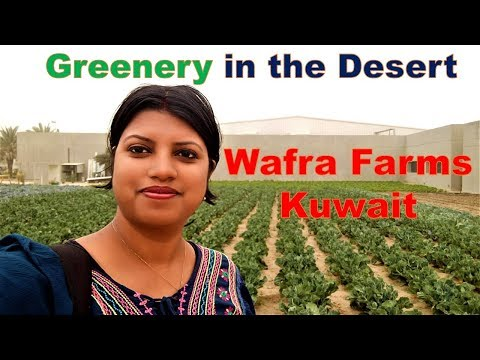 Yasmin farms - Wafra | A must Visit Place in Kuwait - YouTube