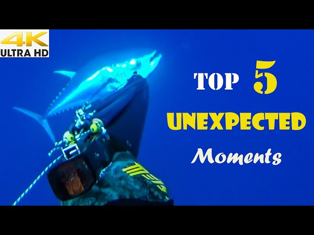 😲TOP 5 UNEXPECTED Moments📹CAUGHT on CAMERA|Spearfishing Life 🇬🇷 [4K]✅