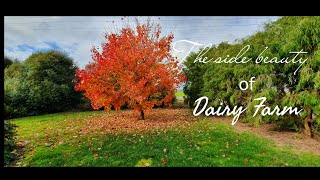 Pinoy Dairy Farmers compilation of nature #Sunrise #Sunset #clouds #AutumnTrees