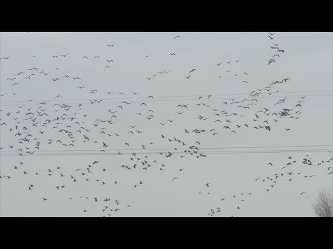 Nebraska Waterfowl Bonanza