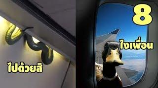 """[มาไงเนี่ยพี่!!]  8 สัตว์โลกไม่น่าเชื่อว่าจะเจอบน """" เครื่องบิน """""""