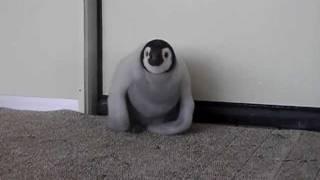 2011年12月23日、南紀白浜アドベンチャーワールドにて撮影。 皇帝ペンギ...