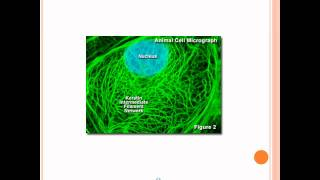 Microfilaments, Intermediate Filaments, and Microtubules