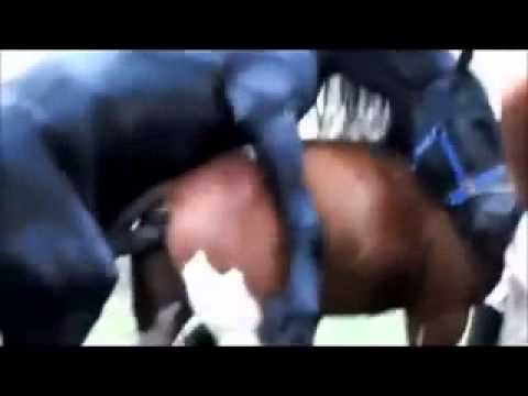 Donkey Mounts Rancher from YouTube · Duration:  1 minutes 2 seconds
