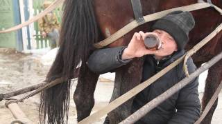 Cum beau moldovenii bere, sau calul meu ii maladet