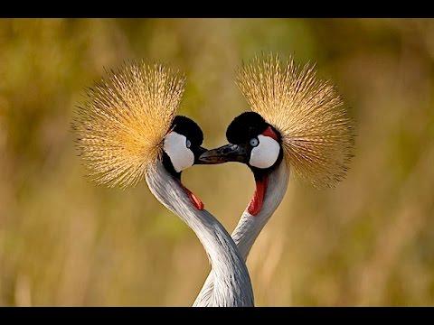 Beauty of Wild Animals...
