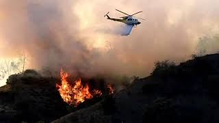 Brush Fire In Griffith Park Forces LA Zoo To Evacuates Some Animals | New_News