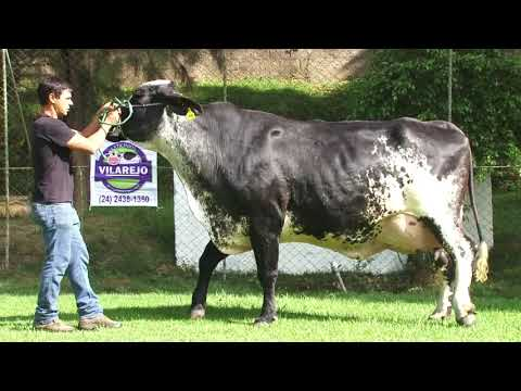 LOTE 1   1816