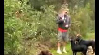 Dog Training Labrador Retrievers K9 Coach Camp