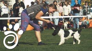 Выставка Собак Как Вид Семейного Отдыха. Все О Домашних Животных