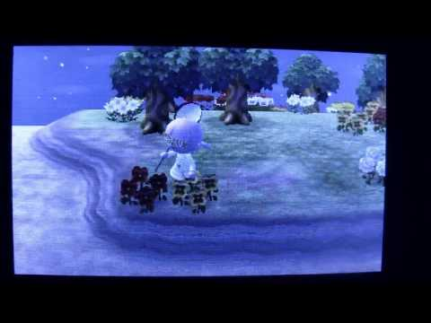 ACNL Make Bank with Beetles