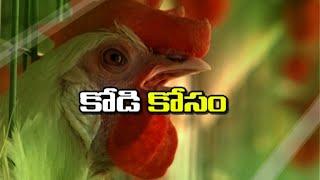 Poultry Farming Techniques