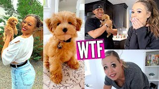 SURPRISING MY PARENTS WITH A PUPPY! *EMOTIONAL* | HeyItsSarai