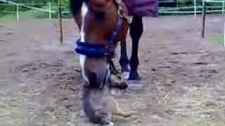 Horse and dog cuddle!