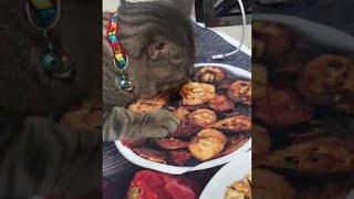 「ちっとも味がしにゃいんだけど」絵に描いた餅ならぬ、印刷された皿のクッキーを食べようとする猫