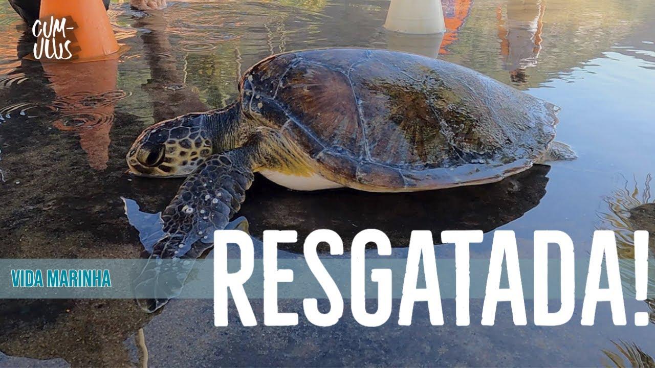 Resgate de tartaruga marinha na Praia Vermelha, Rio de Janeiro