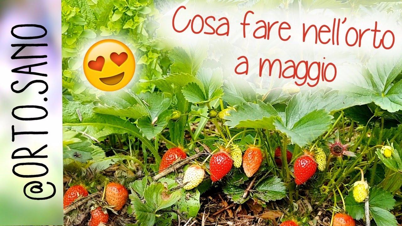 Lavori nell 39 orto a maggio come piantare i pomodori e le for Piantare pomodori