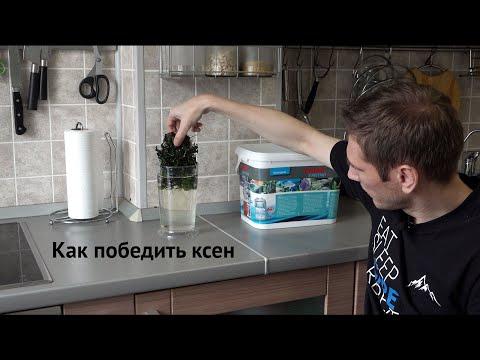 Вопрос: Как убрать с аквариумных растений черный мох?