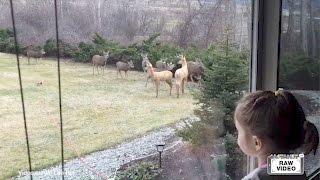 Bambi in backyard