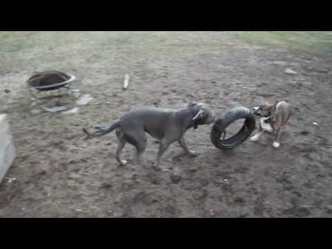diy-how-to-make-a-homemade-super-dog-toy-for-heavy-chewers