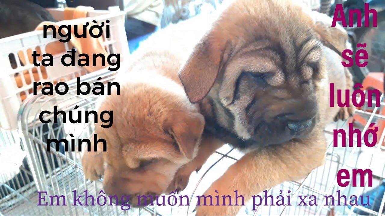 Cái kết sau khi hỏi giống chó và giá chó ở chợ chó mèo thú cưng lớn nhất | puppy sale price