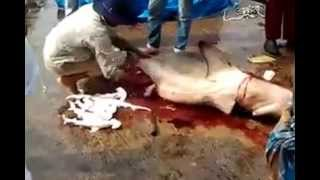Video Kill Shrak Fish With her babys ▬ download MP3, 3GP, MP4, WEBM, AVI, FLV Juni 2018