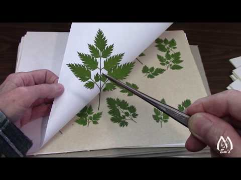 Part 3 | Results of Pressing Flowers | Peeking at Pressed Flowers | Flowers to Press