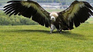 #4184. Птицы - хищники (В мире животных)