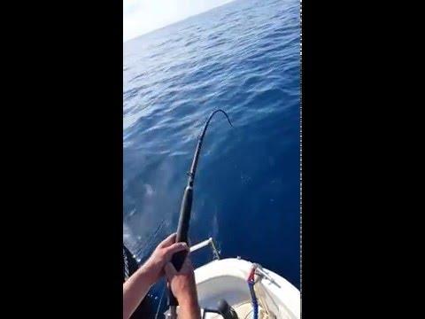 adriatic sea Montenegro shark!!!