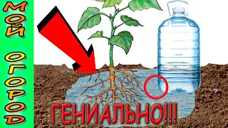 How to make drip irrigation from a plastic bottle. Free drip irrigation