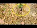 What happen problem 0n baby Viola in gap tree| Small baby Viola scare when not see mom.