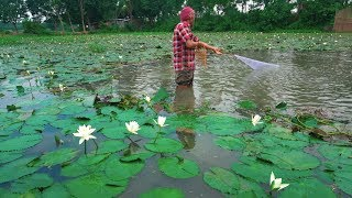 Net Fishing | Catching Lot of Fish By Cast Net | Fishing with beautiful nature (Part-12)