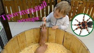 Видео для детей, развивающее. Про животных.Контактный, Трогательный зоопарк!(Сегодня мы посетили Трогательный зоопарк! Где можно кормить и трогать животных! Нам очень понравилось,..., 2016-11-30T10:32:59.000Z)