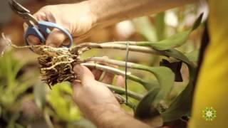 Como cuidar de orquídeas - Dona Flor