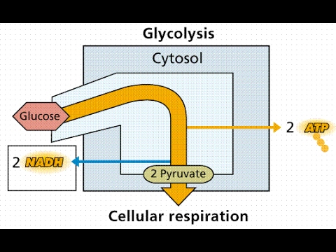 Glycolysis pathway easy way flow chart youtube glycolysis pathway easy way flow chart ccuart Images