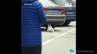 Кошка, которая выполняет что-то похожее на спортивные упражнения под припаркованным автомобилем