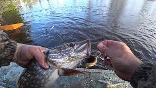 ПРОВЕРКА СЕТЕЙ ЗАТОПЛЕННОМ ЛЕСУ Улов рыбы радует Хорошие щуки плотва язи